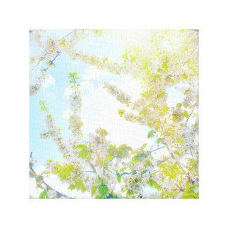 Kirschblüten im Sun Leinwanddruck