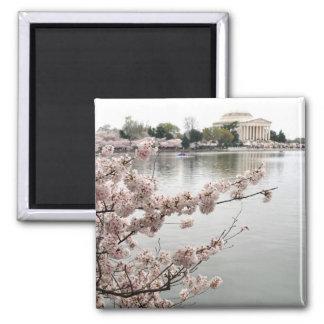 Kirschblüten - Jefferson-Denkmal Quadratischer Magnet