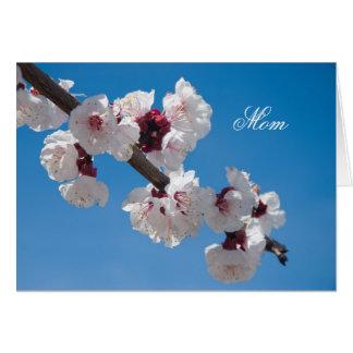 Kirschblüten Karte