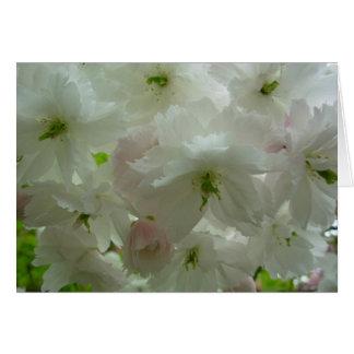 Kirschblüten-Karten-personifizieren weiße Karte