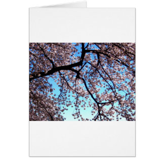 Kirschblüten * Liebe Karte