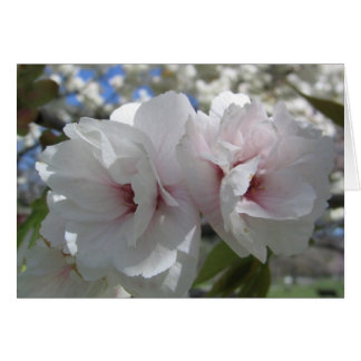 Kirschblüten-Nahaufnahme Karte