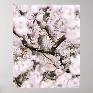 Kirschblüten-Plakat Poster