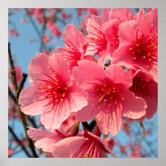 Kirschblüten Poster