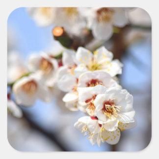 Kirschblüten Quadratischer Aufkleber