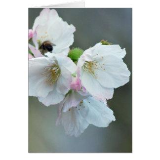 Kirschblüten und -bedeutung karte