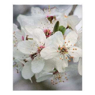 Kirschkirschblüte-Blüte Flyer