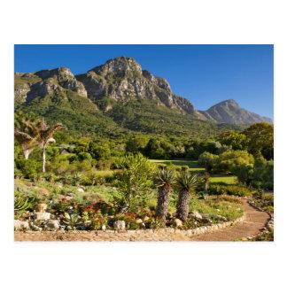 Kirstenbosch botanische Gärten, Cape Town Postkarte