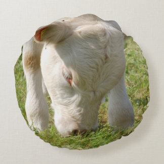Kissen Kühe Kälber Rinder - von Jean-Louis Glineur