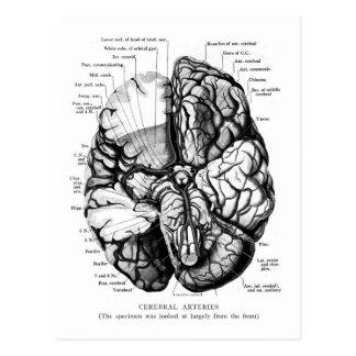 Kitsch-Vintage medizinische Illustration Ihr Postkarte
