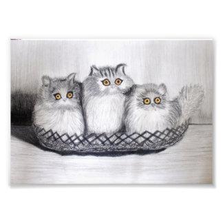 kittiess fotodruck