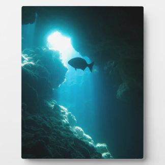 Klare blaue Höhle und Fische Fotoplatte