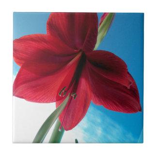 klare rote Blume der Amaryllis-108a Fliese