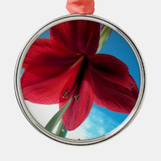 klare rote Blume der Amaryllis-108a Silbernes Ornament