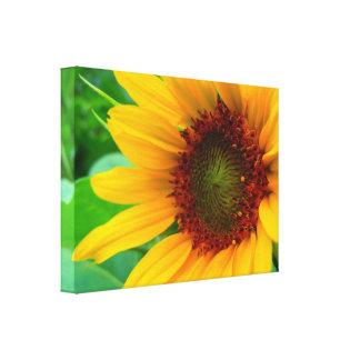 Klare Sonnenblume Leinwanddruck