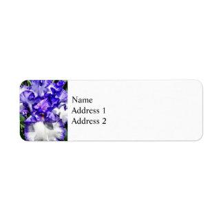 Klassische Blick-Iris-Nahaufnahme