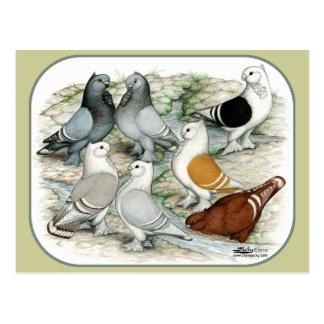Klassische Krause abgehaltene Tauben Postkarten