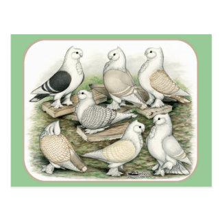 Klassische Krause-Tauben Satinettes Postkarte