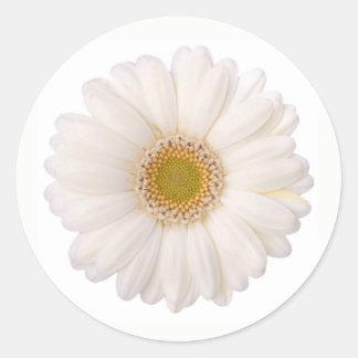 Klassische weiße Gerbera-Gänseblümchen-Blume Runder Aufkleber