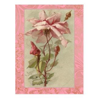 Klein alte rosa Rose u. Knospen Postkarte