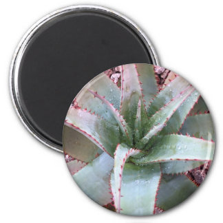 Kleine Agave Runder Magnet 5,1 Cm
