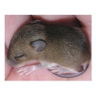 Kleine Baby-Maus mit niedlichem Ohr-Schlaf oben Postkarte