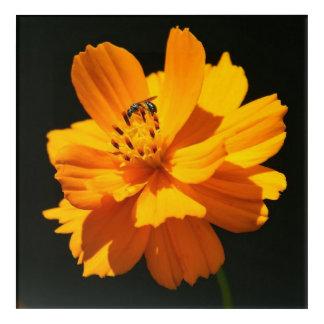 Kleine Biene, Acryldruck