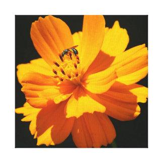Kleine Biene, eingewickelter Leinwand-Druck Leinwanddruck