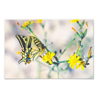 Kleine gelbe Blumen und schöner Schmetterling Fotodruck