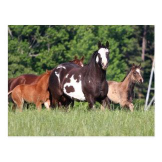 Kleine Gruppe Pferde der verschiedenen Farben Postkarten