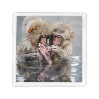 Kleine heiße Quellen der Affe-|, Japan Acryl Tablett