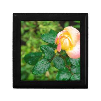 Kleine Herbst-Rose mit Tröpfchen Schmuckschachtel