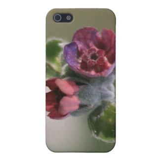Kleine kastanienbraune Colorado-Wildblume 4/4s iPhone 5 Cover