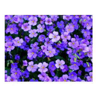 Kleine lila Blumen Postkarte