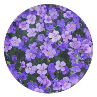 Kleine lila Blumen Teller