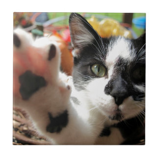 Kleine quadratische Fliese der Katze der