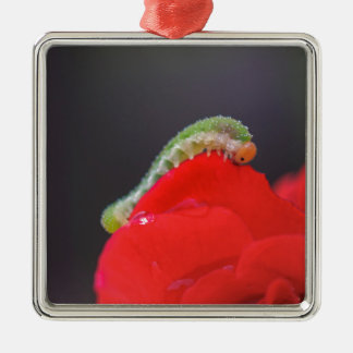 Kleine Raupe Silbernes Ornament