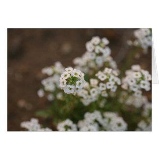 Kleine weiße Blume Karte