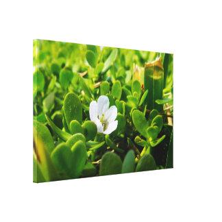 Kleine weiße Blume Leinwanddruck