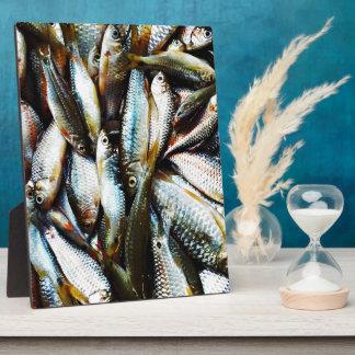 Kleine weiße Fische Fotoplatte