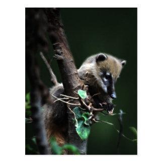 Kleiner Gauner Coati - Lemur Postkarte