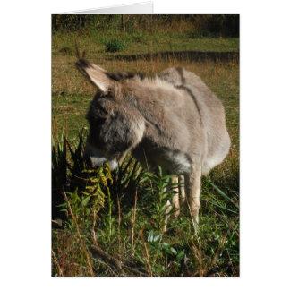 Kleiner grauer Esel mit Wildblumen Karte