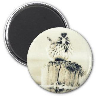Kleiner kleiner Hinterhof-Vogel Runder Magnet 5,1 Cm