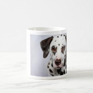 Kleiner Kuchen, die dalmatinische Kaffee-Tasse Kaffeetasse