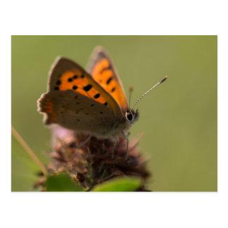 Kleiner kupferner Schmetterling Postkarte