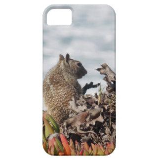 Kleines Eichhörnchen iPhone 5 Cover