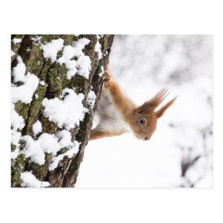 Kleines Eichhörnchen Postkarte