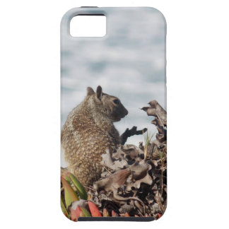 Kleines Eichhörnchen Schutzhülle Fürs iPhone 5