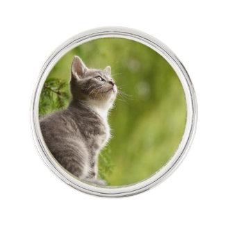 Kleines graues und weißes Kätzchen blickt bis zum Anstecknadel