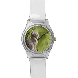Kleines graues und weißes Kätzchen blickt bis zum Armbanduhr